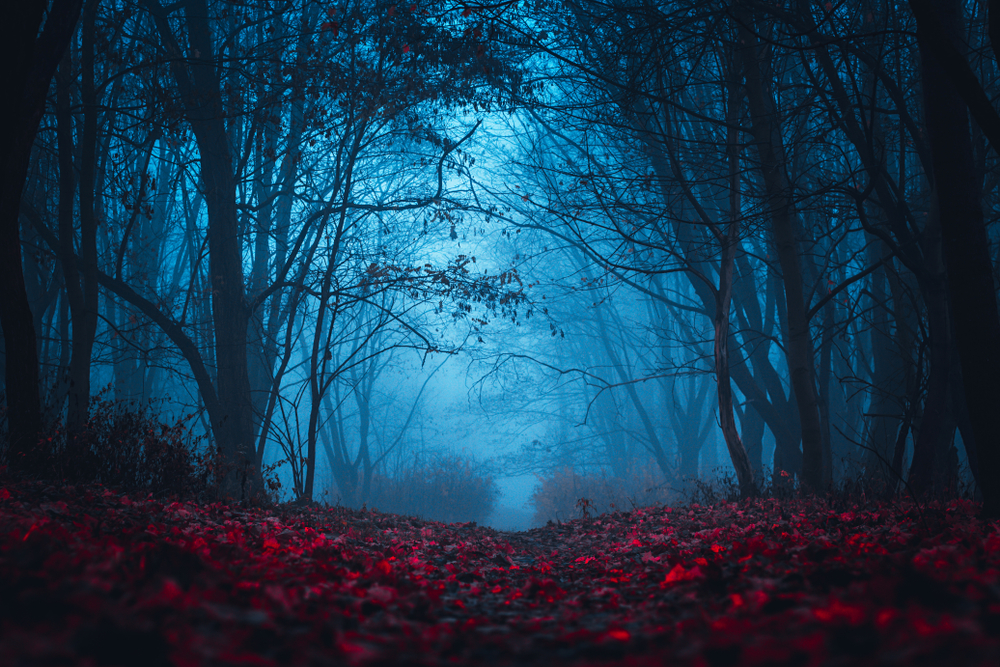 Paranormal, Vampires, Secrets, Death, Horror, Fear, Blood, Fairy, Mysterious, Forest
